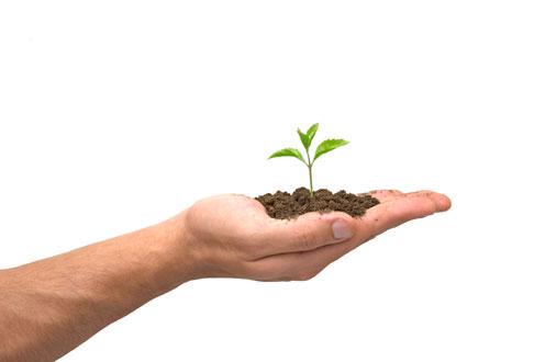 Inspiratie-plantje-op-hand Stagiaires